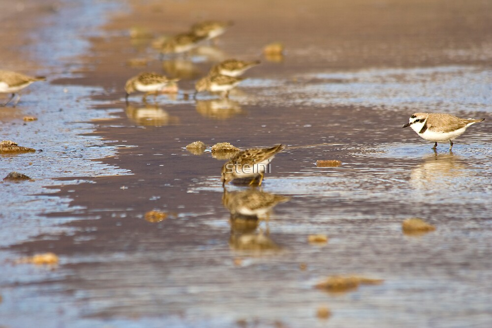 Birds at Death Valley by steini