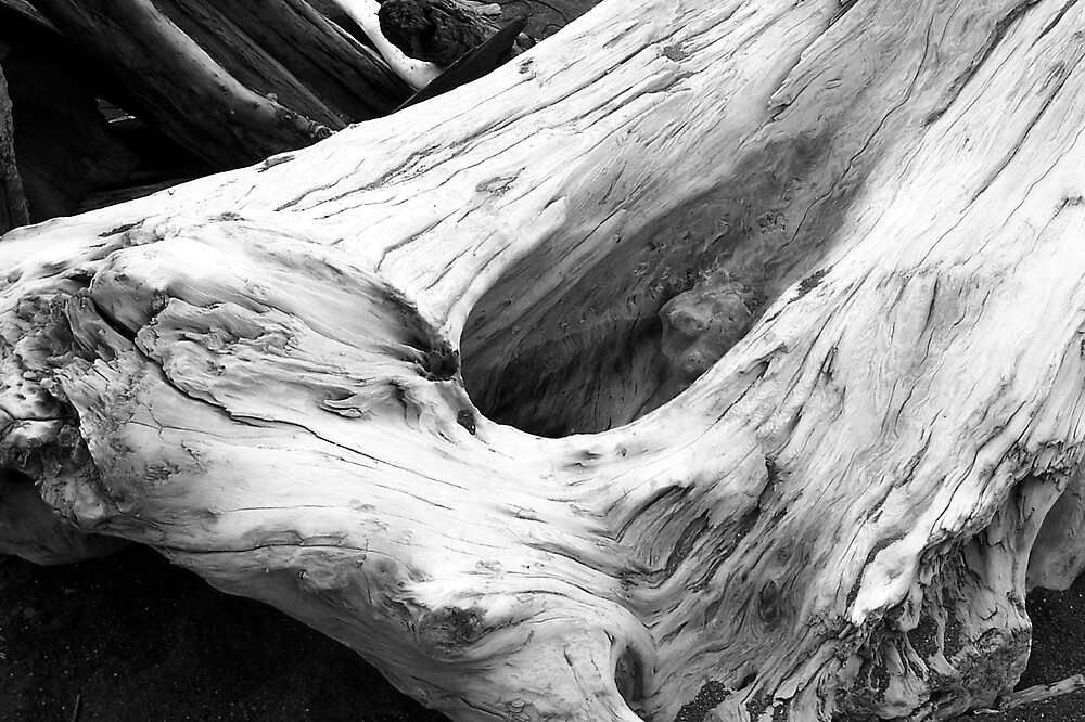 Driftwood 3 by Carrie Norberg