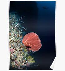 Pink gorgonian  Poster