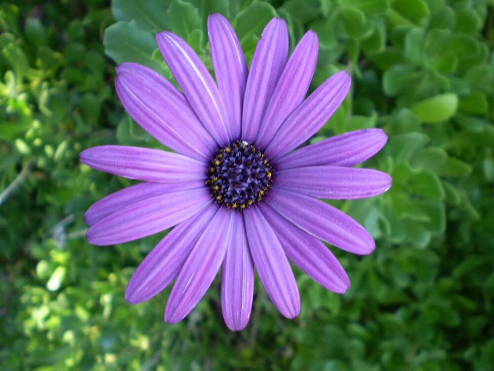 Pleasurable Purple by veevixen
