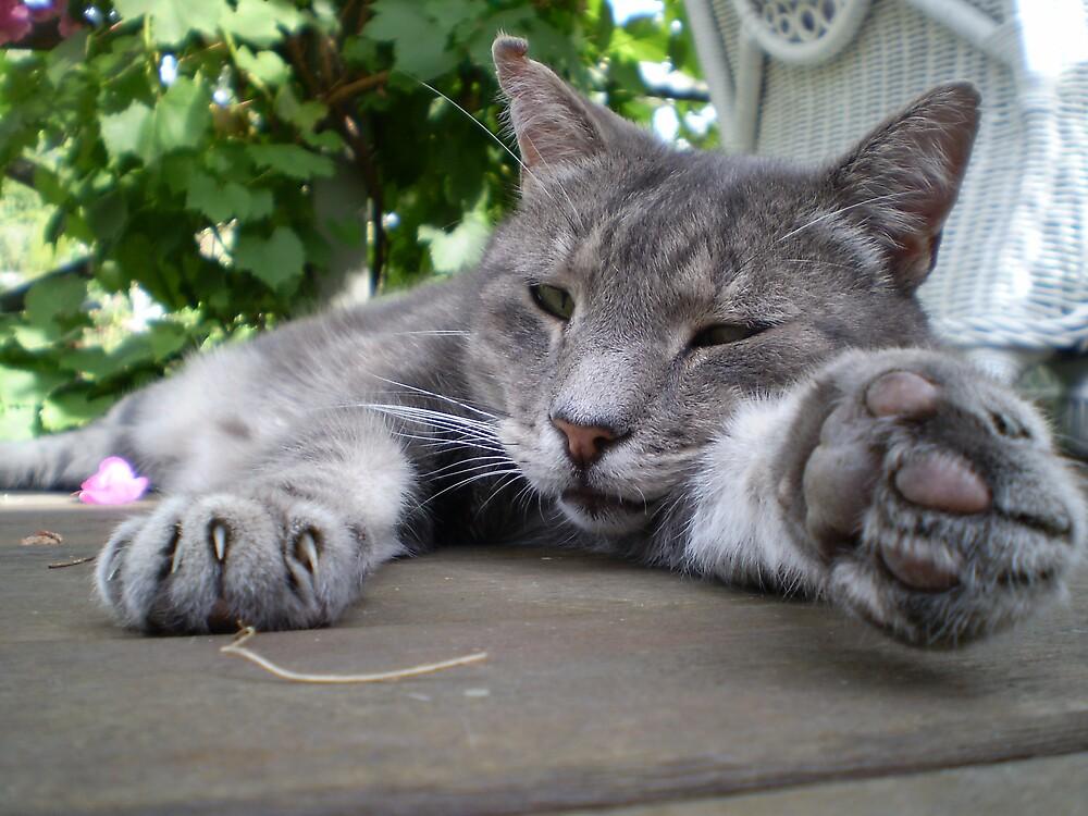 Lazy Day by veevixen