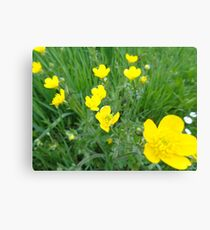 Yellow countryside flowers Canvas Print