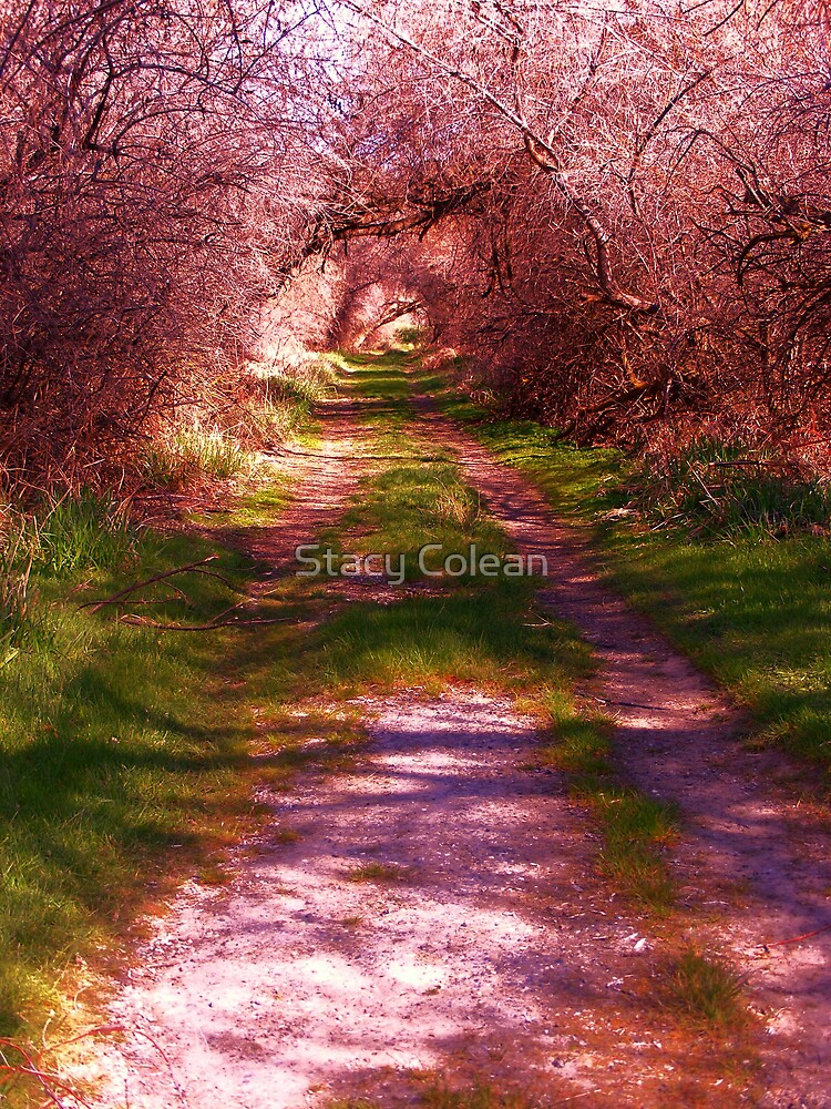 This way to Candy Land.. by Stacy Colean