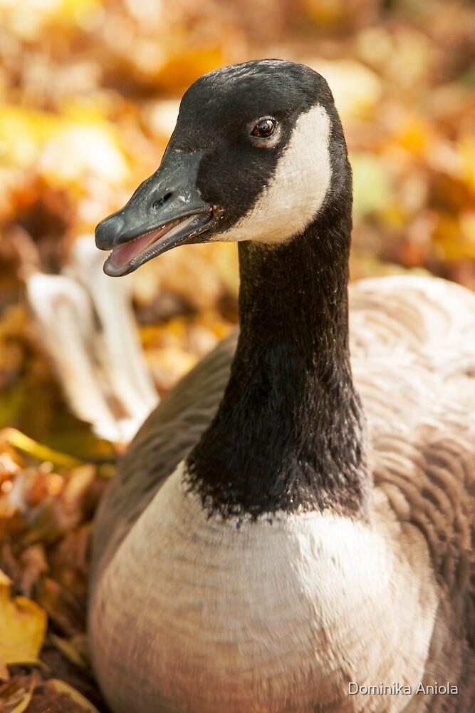 Autumn Goose by Dominika Aniola