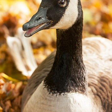 Autumn Goose by domcia