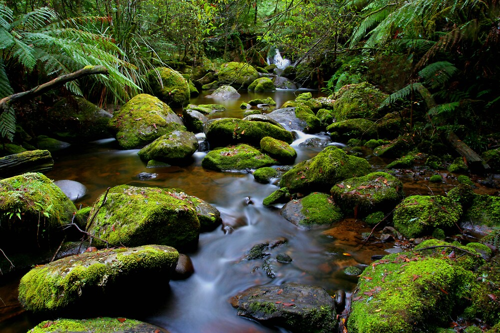 Mossy Green Rocks by Lindsay Knowles