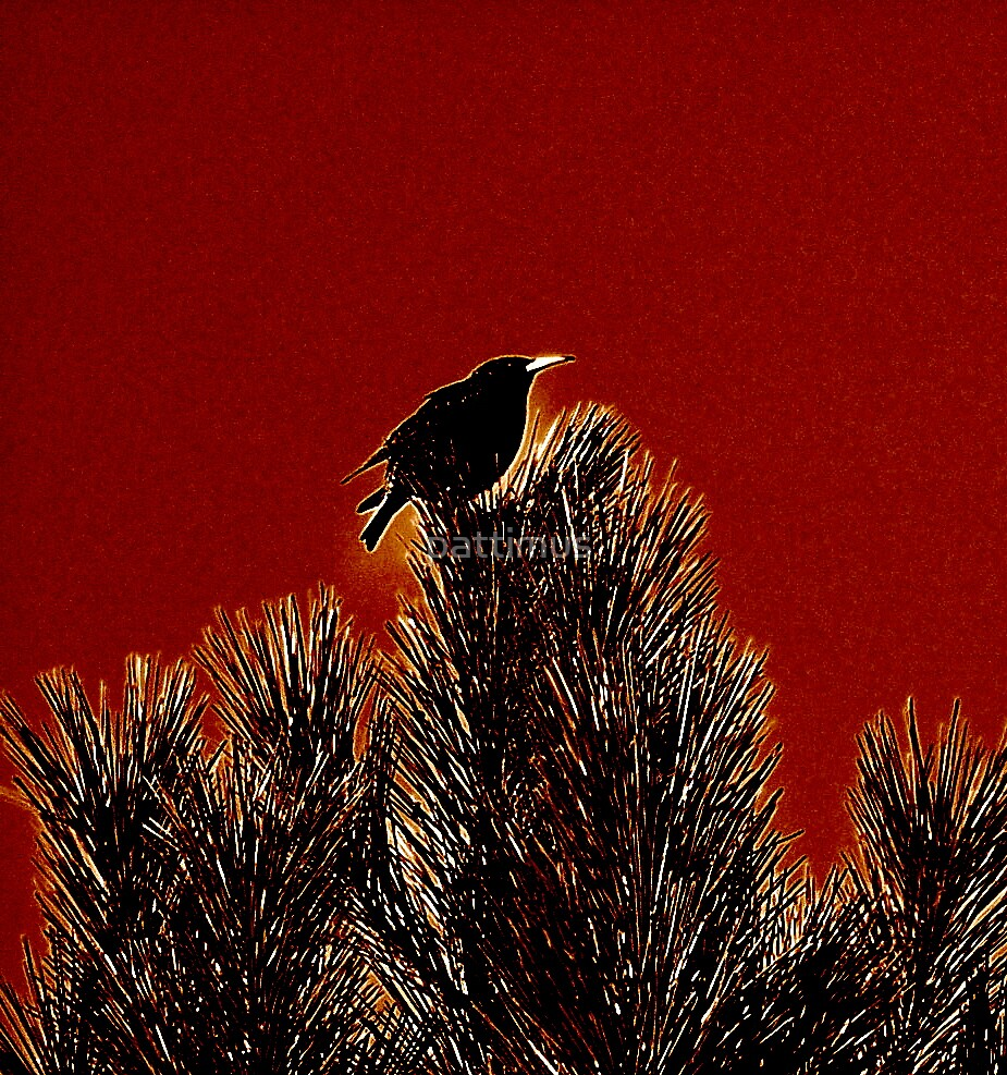 Starling's Song by pattimus