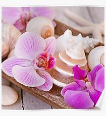 Pink Orchid and Maritime Objects Still Life Poster