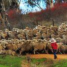 """ Young Shepherd "" by helmutk"