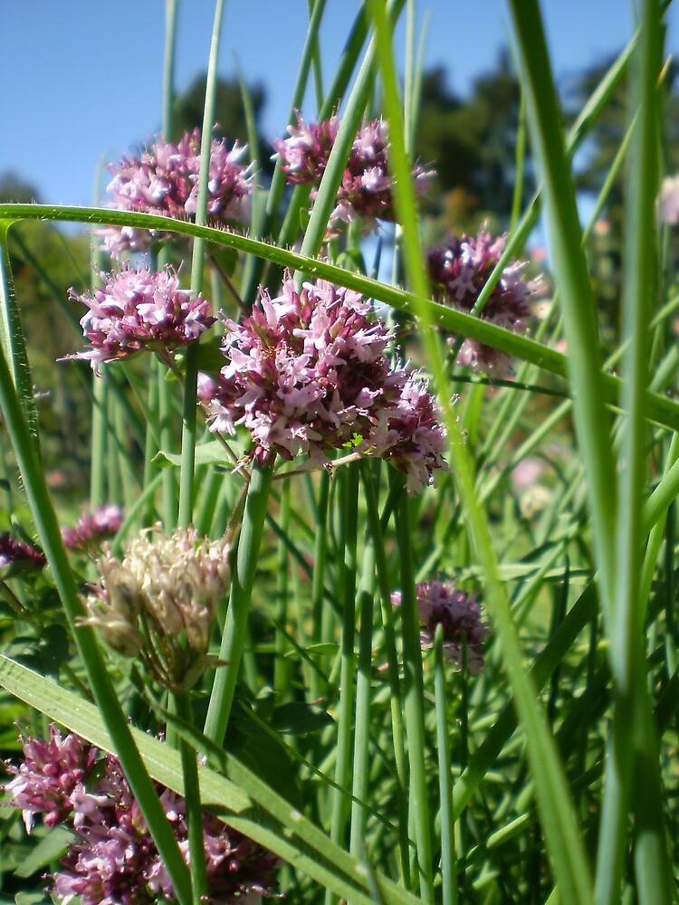 Herbs by veevixen