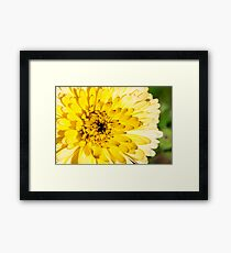 Flower with yellow petals, macro Framed Print