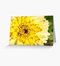 Flower with yellow petals, macro Greeting Card