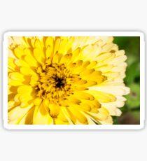 Flower with yellow petals, macro Sticker