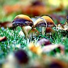 Magic Shrooms by Lindsey Downing