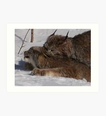 Mating rituals Art Print