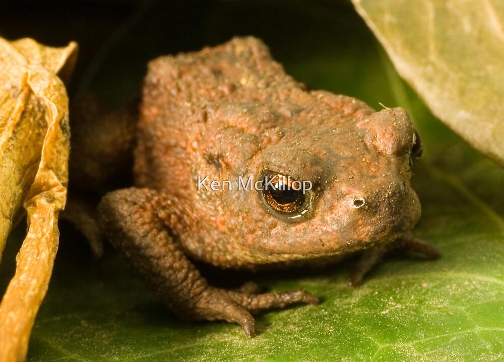 toad by Ken McKillop