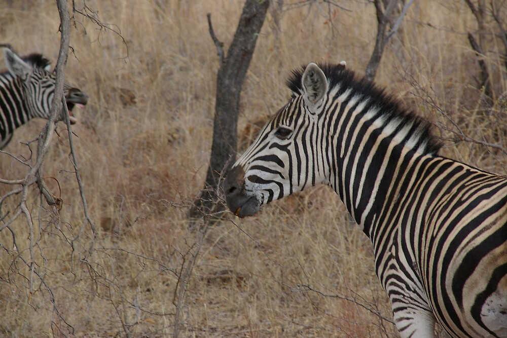 The zebra in the front was my focus, but the one in the back stole the show by Deidre Cripwell