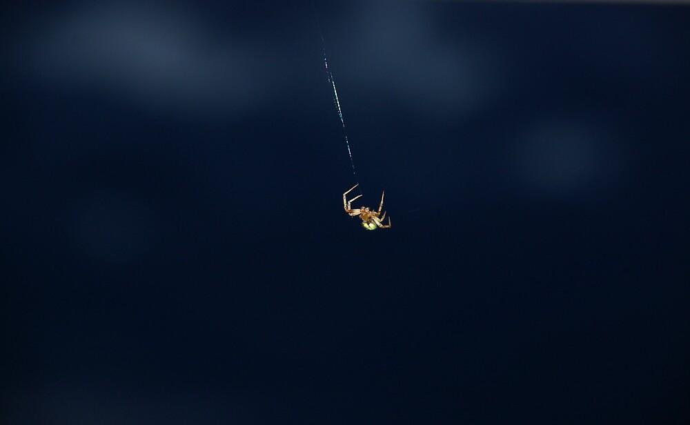 Itsy Bitsy Spider by Deidre Cripwell