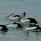 Pelicans I by Ashley Ng