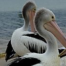 Pelicans II by Ashley Ng
