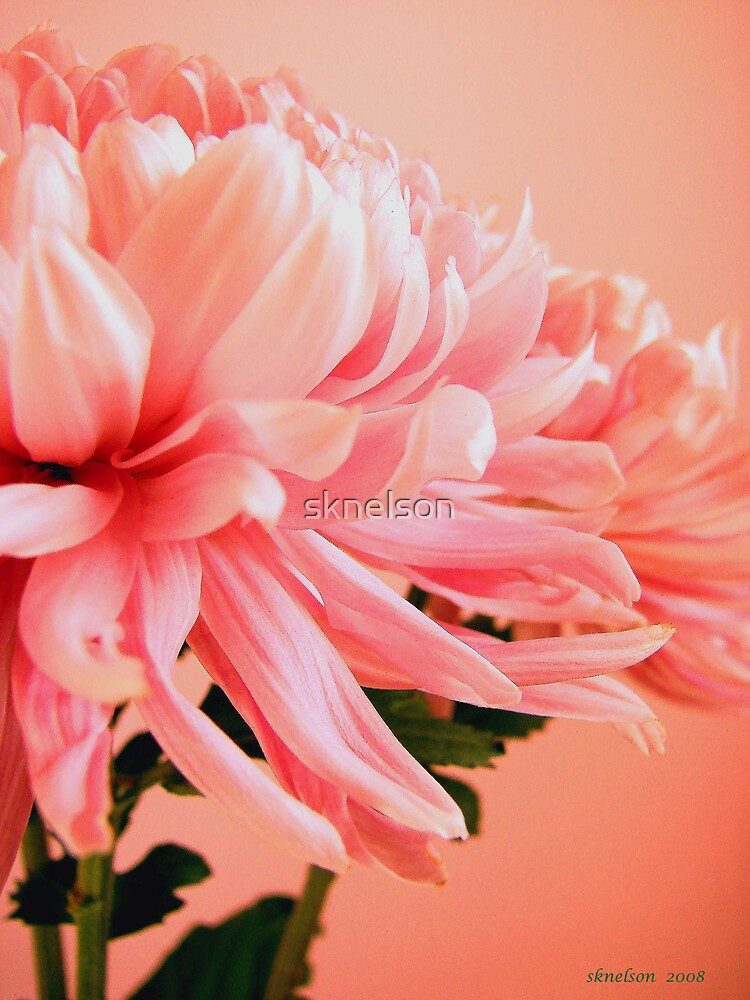 Bouquet by sknelson