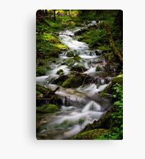 Forest Stream (Slovenia) Canvas Print