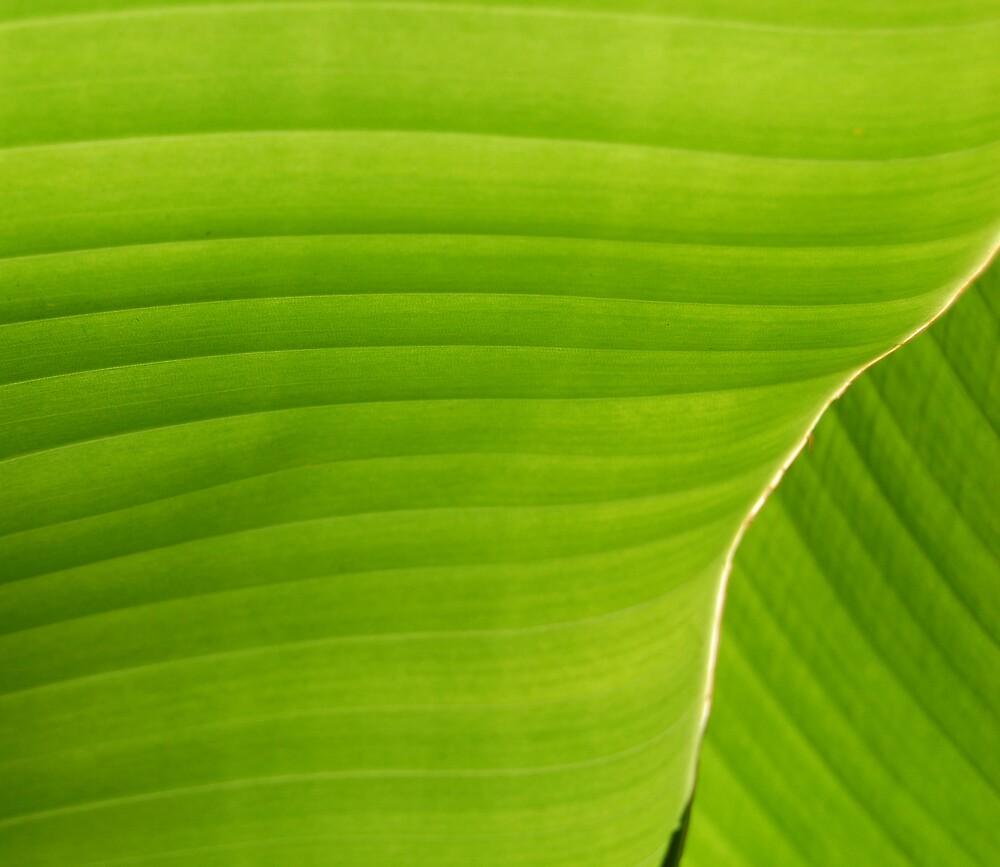 Leaf Texture by Emilie Pennington