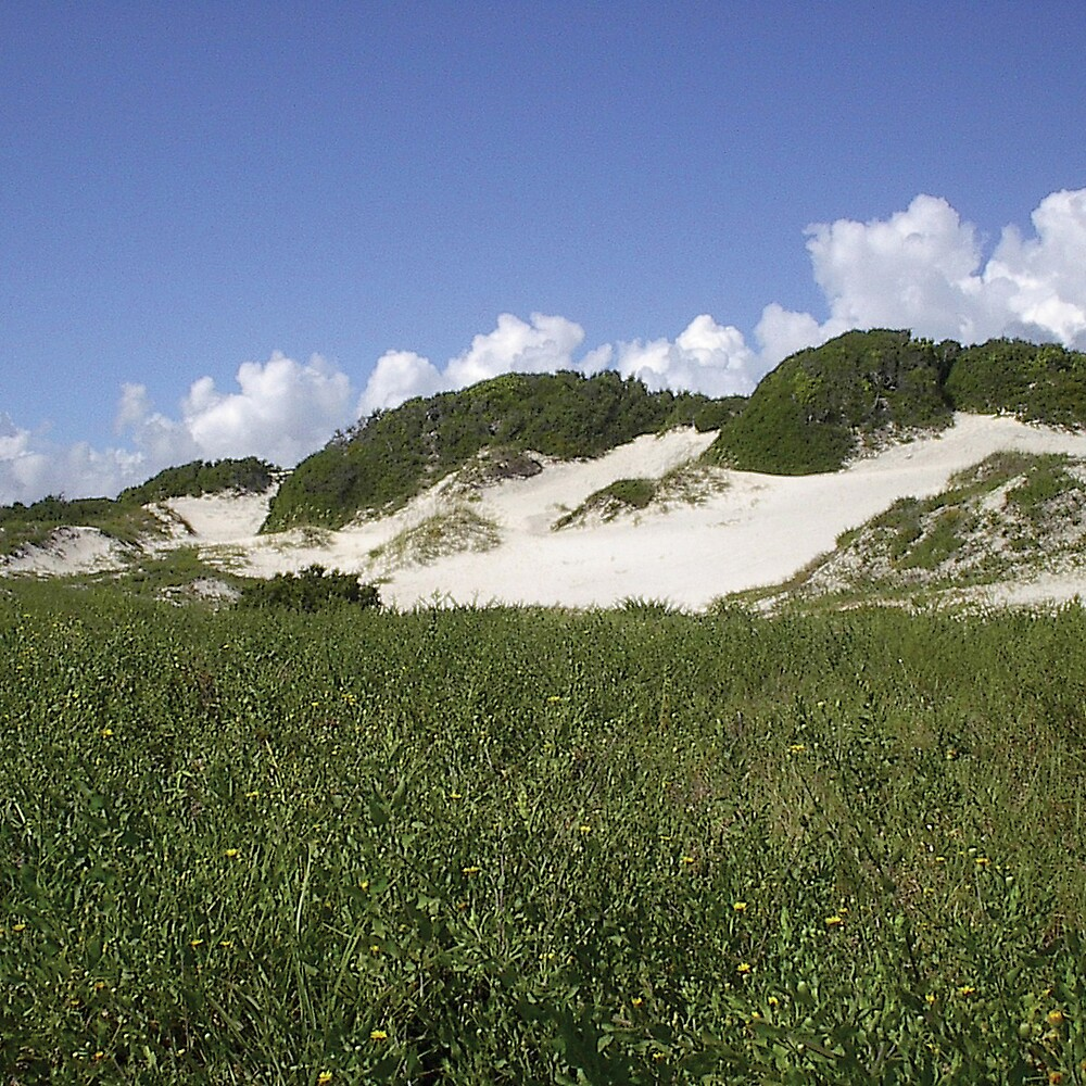 Dunes at American Beach by Emilie Pennington