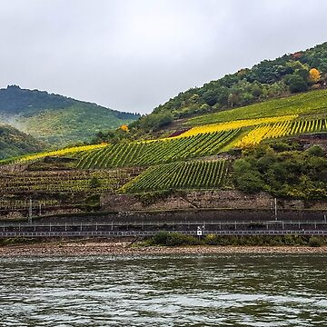 Vineyards along the way by sherfin