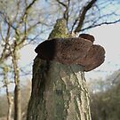 Tree Fungus by bubblebat
