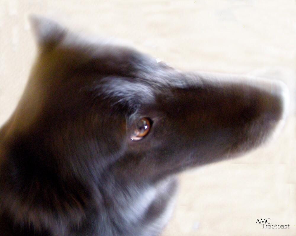 Dogeye by Treetoast