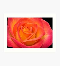 Two-tone Rose Art Print