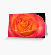 Two-tone Rose Greeting Card