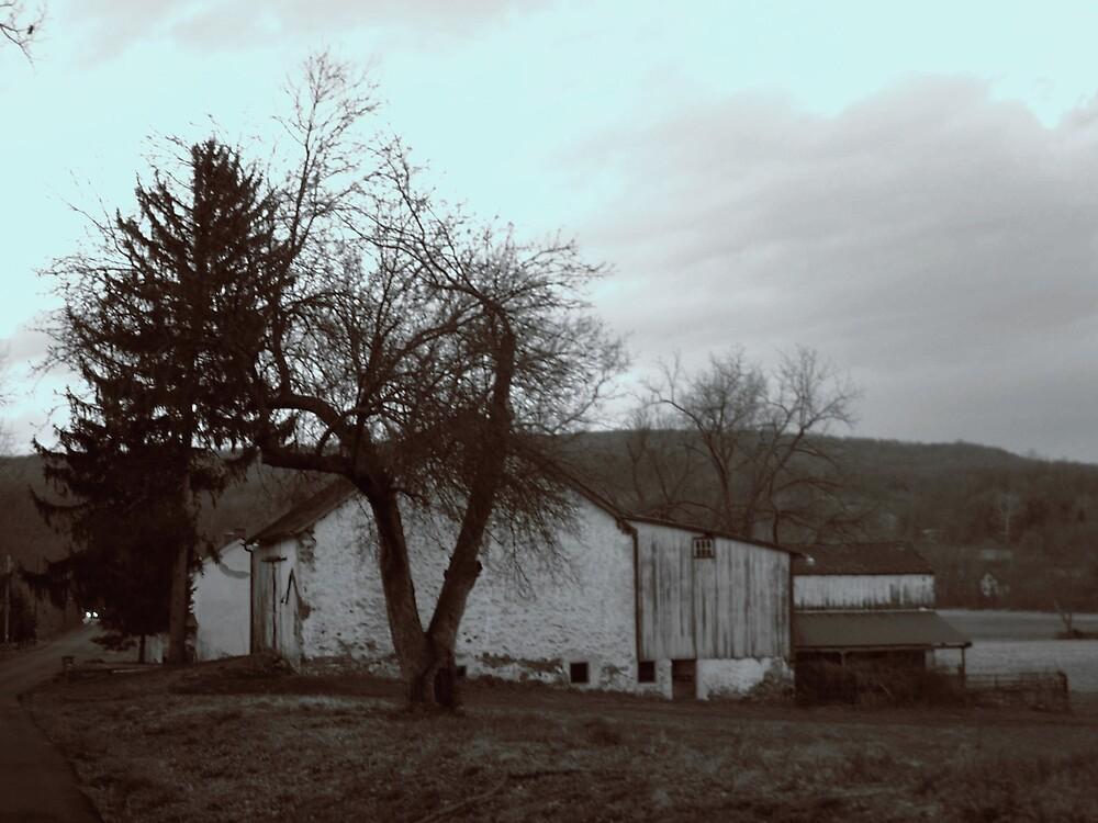 White Barn by Judi Taylor