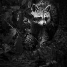 Peeking Through the Poison Ivy - Mommy Raccoon - B&W by MotherNature2