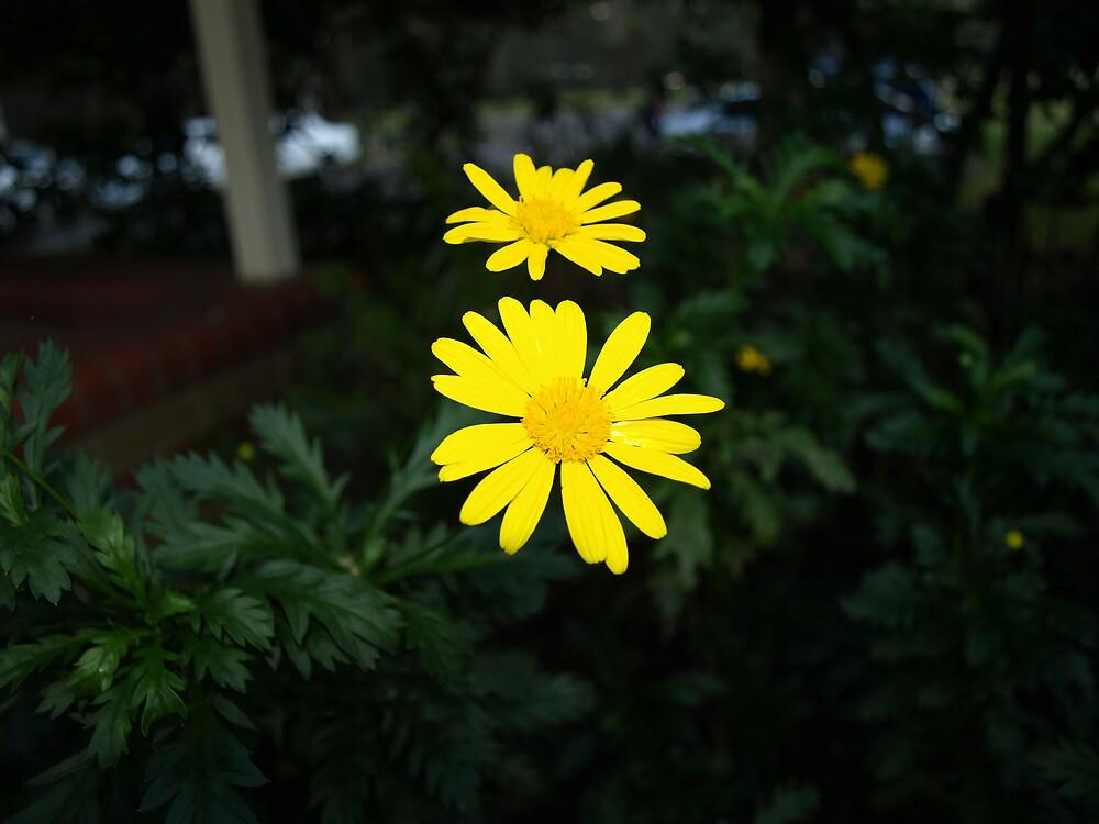 Daisy by Mariebel Ferro