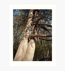 Now That's a Tree Hugger Art Print