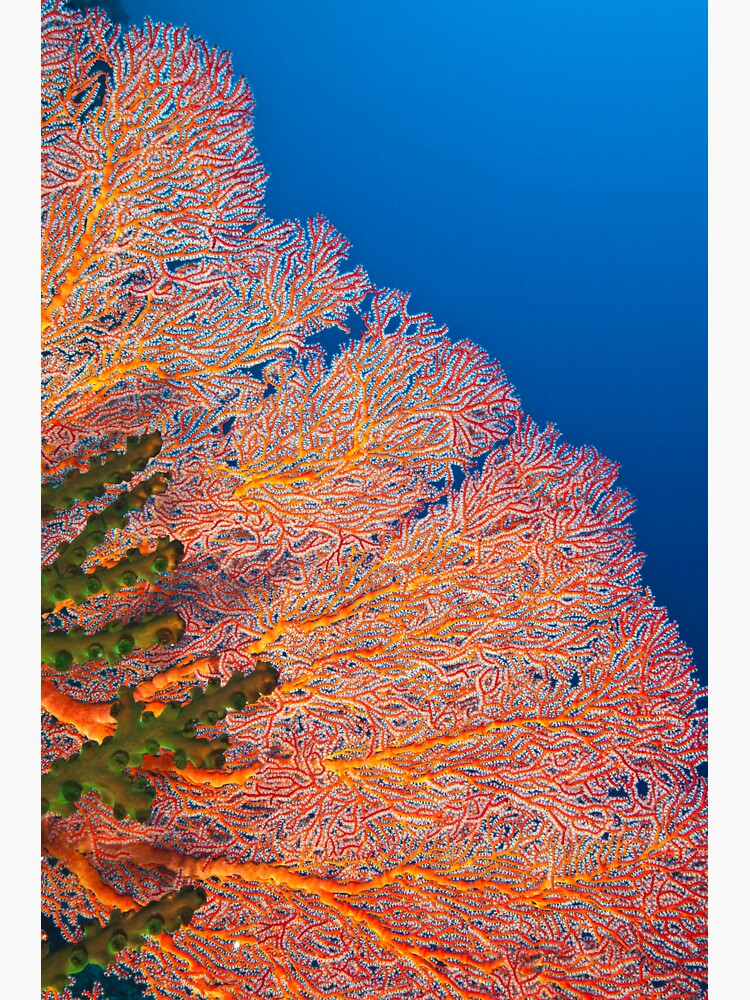 Colours of the reef by DavidWachenfeld