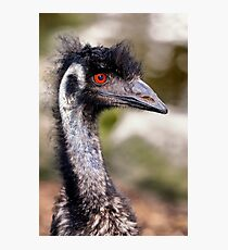 Portrait of an Emu Photographic Print
