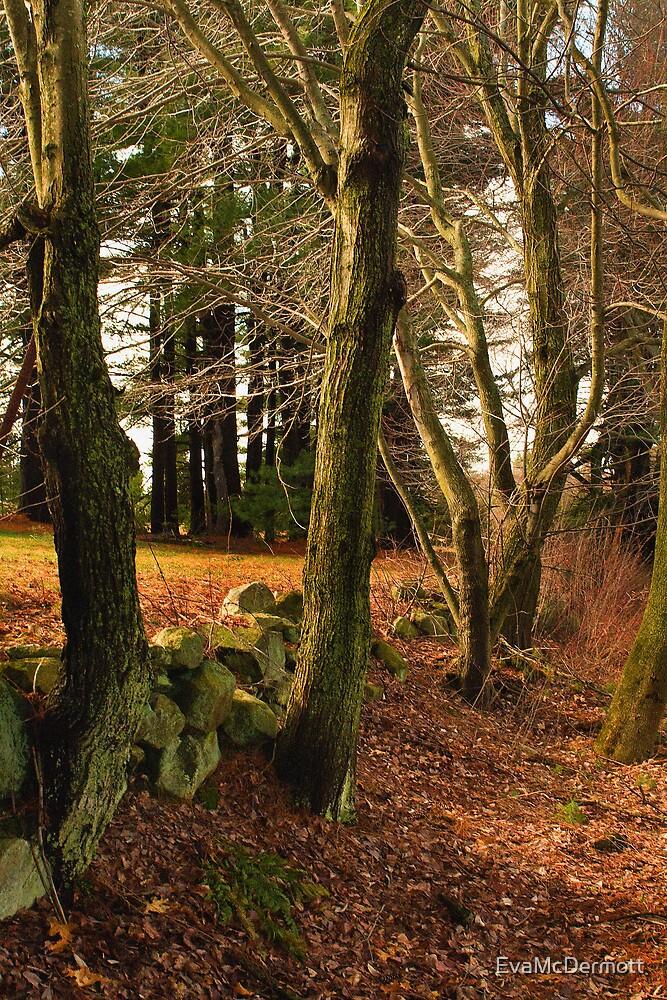 Trees by EvaMcDermott