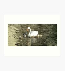 Swan update Art Print