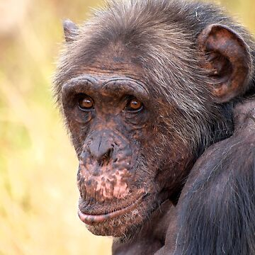 Charles by ROFchimps
