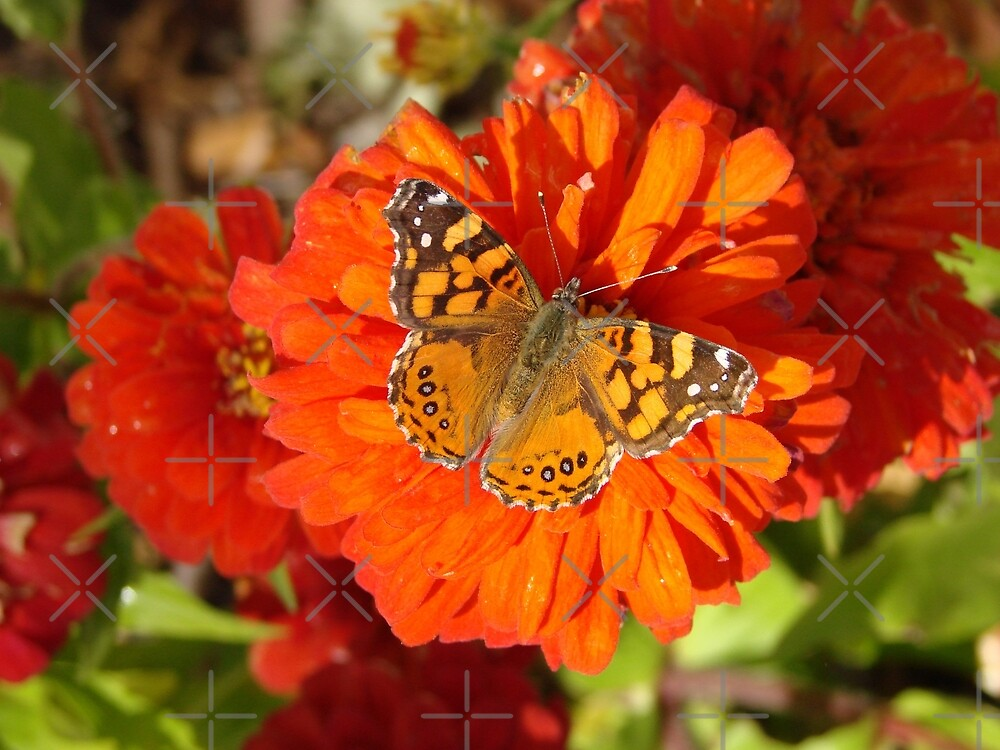 Butterfly Kisses by Kimberly Miller