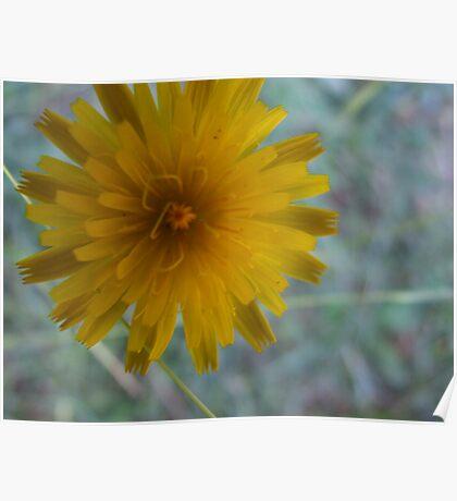 Beautiful Dandelion Poster