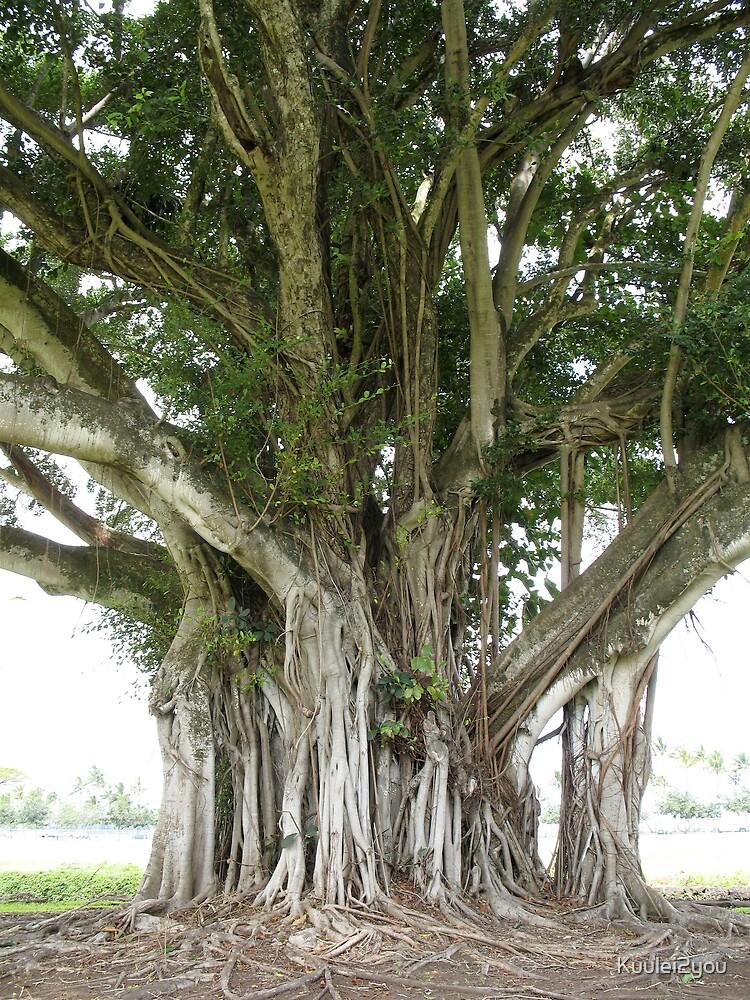 Banyan Tree by Kuulei2you