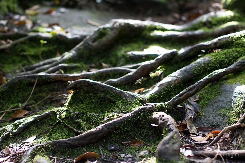 Root n Moss by norgan