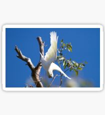 Aussie icon - Sulphur-crested Cockatoo  Sticker
