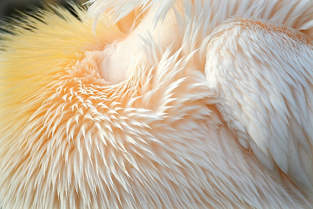 Feather Abstract by Alexandra Lavizzari