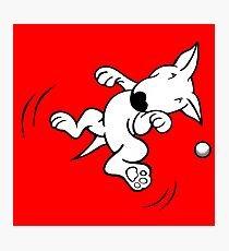 Flying English Bull Terrier  Photographic Print