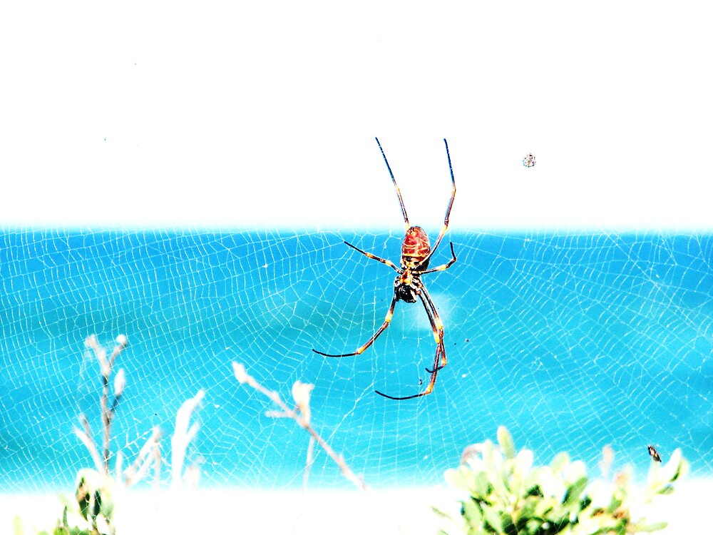 spider @ beach by lauralock